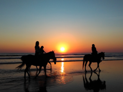 Horse riding in the Camargue - South of France