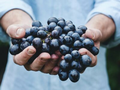 A hand full of grapes representing the wine in Bordeaux