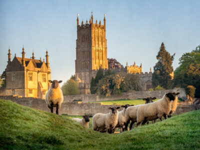 A church with sheep in a field in the Cotswold
